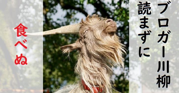 ブロガー川柳大好きなヤギ