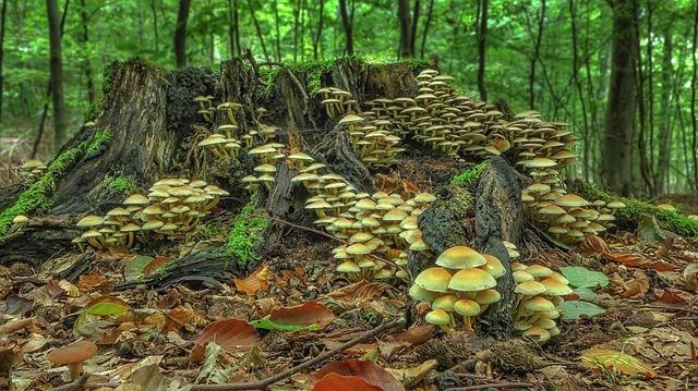 川柳はブロガーも詠む 森の中
