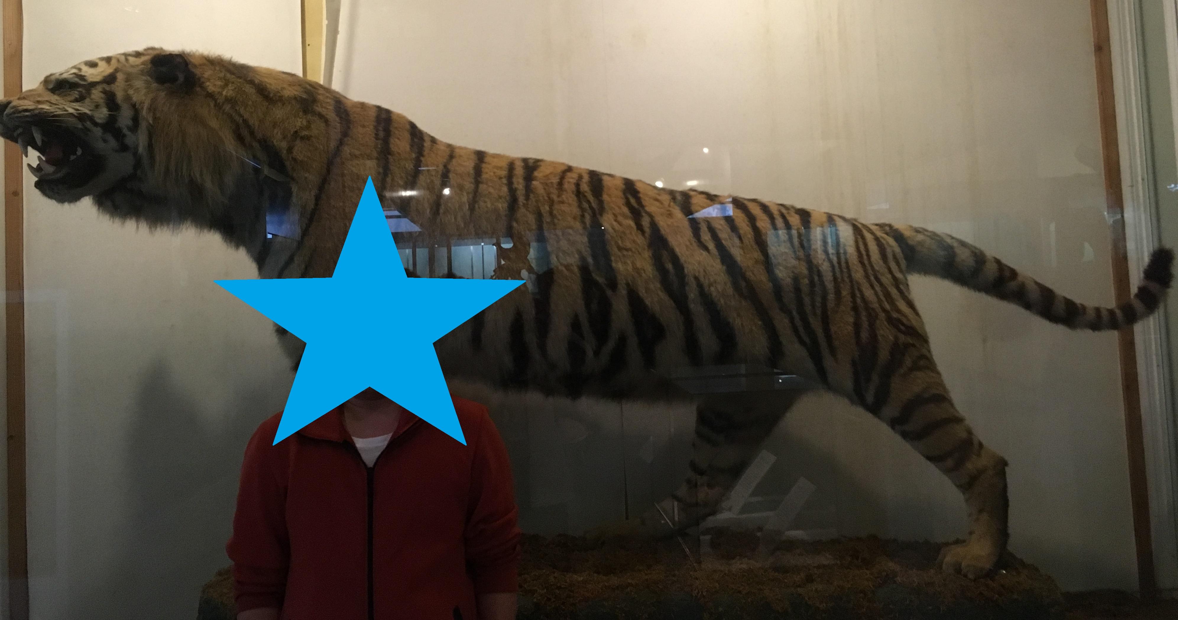 静岡の穴場ねこの博物館巨大な虎