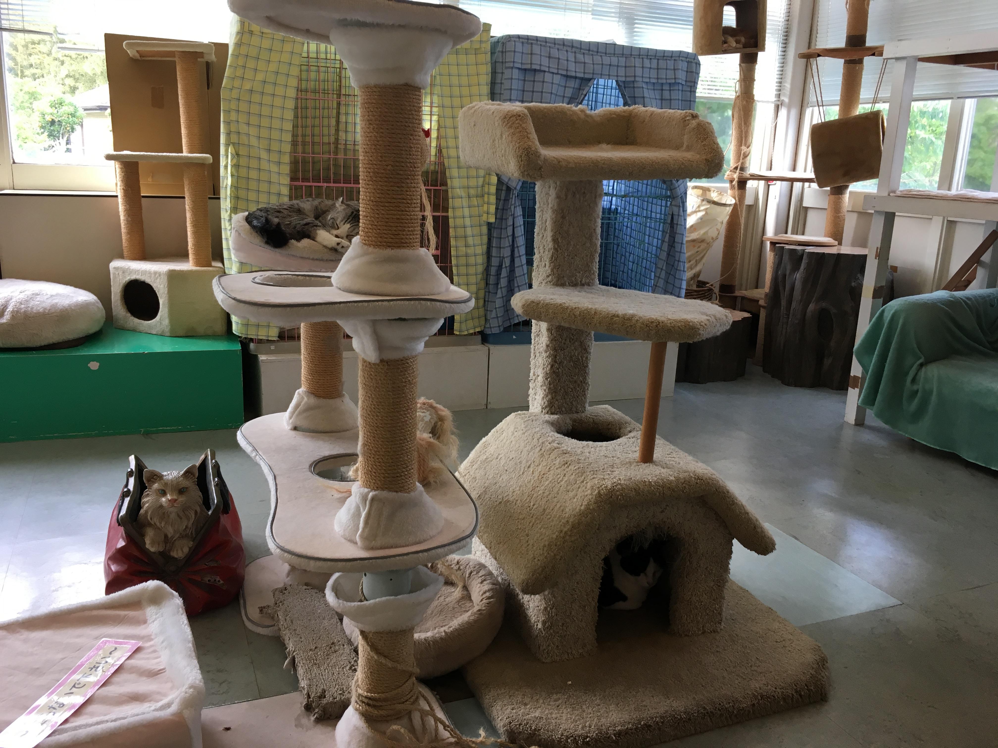 静岡の穴場ねこの博物館2階の猫カフェ