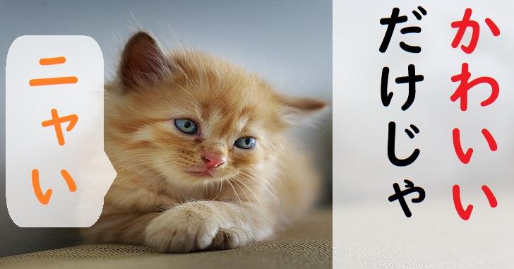 静岡観光の穴場子猫