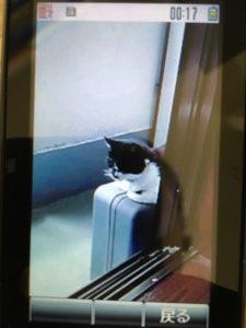 待っていた黒白猫