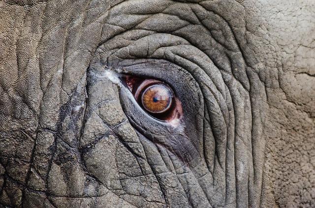 頭のいい象の目