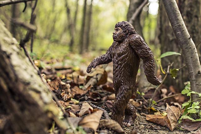 二足歩行の類人猿