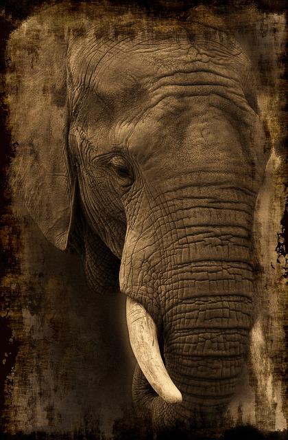 年老いた象