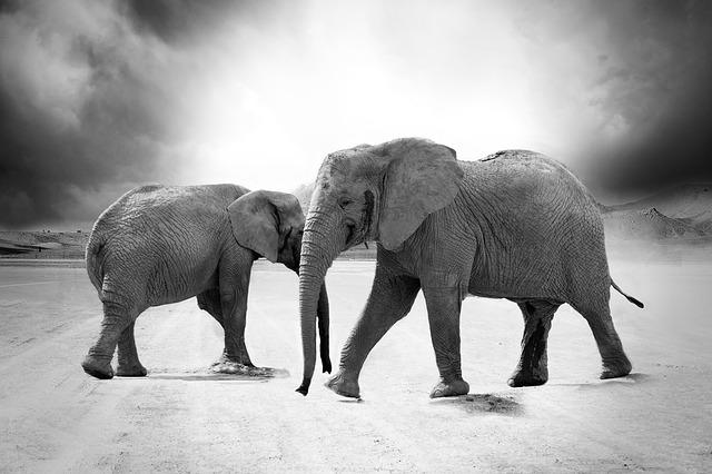 四足歩行の象