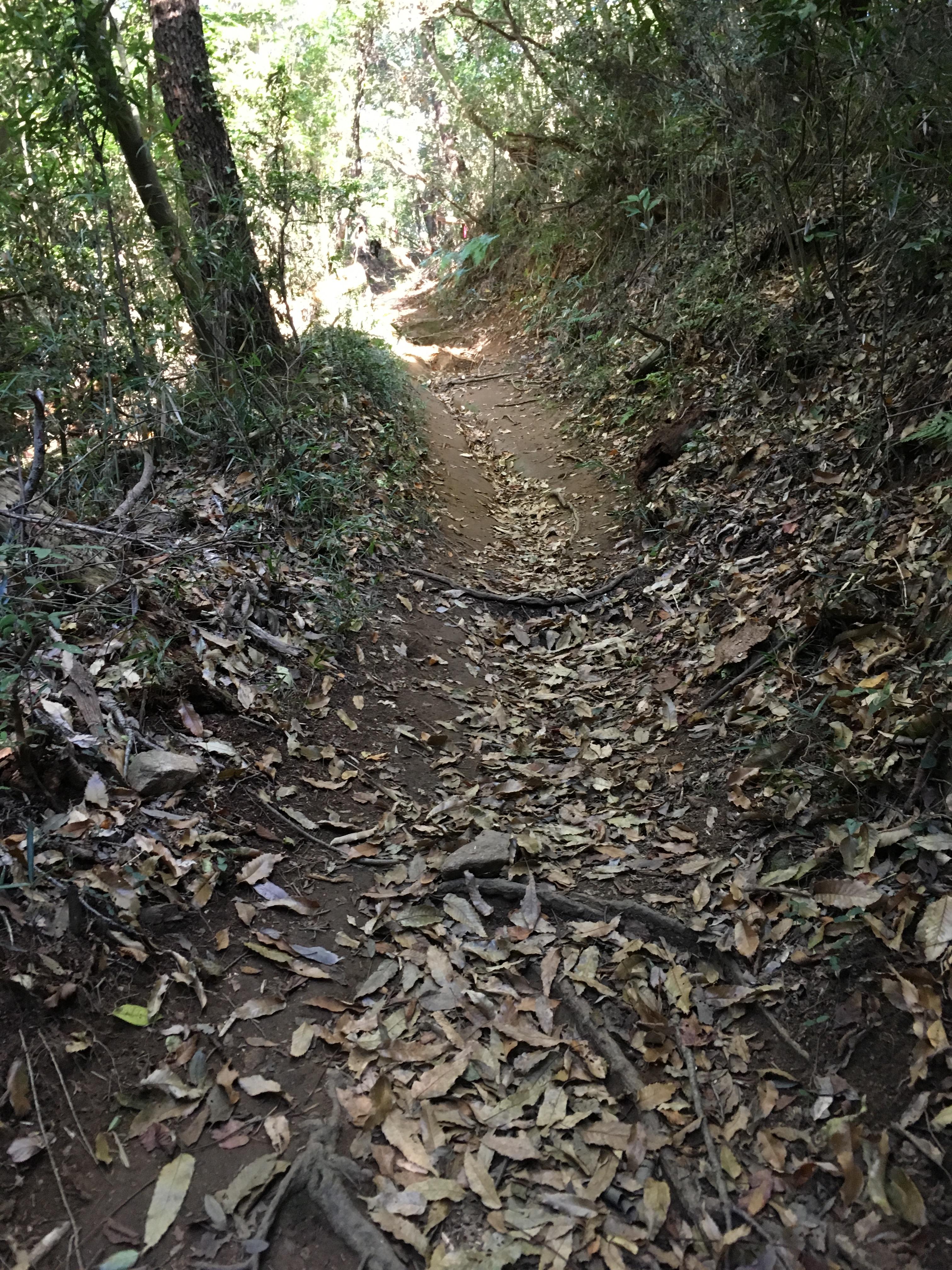 ダイエット登山 宝篋山登山道の狭さ