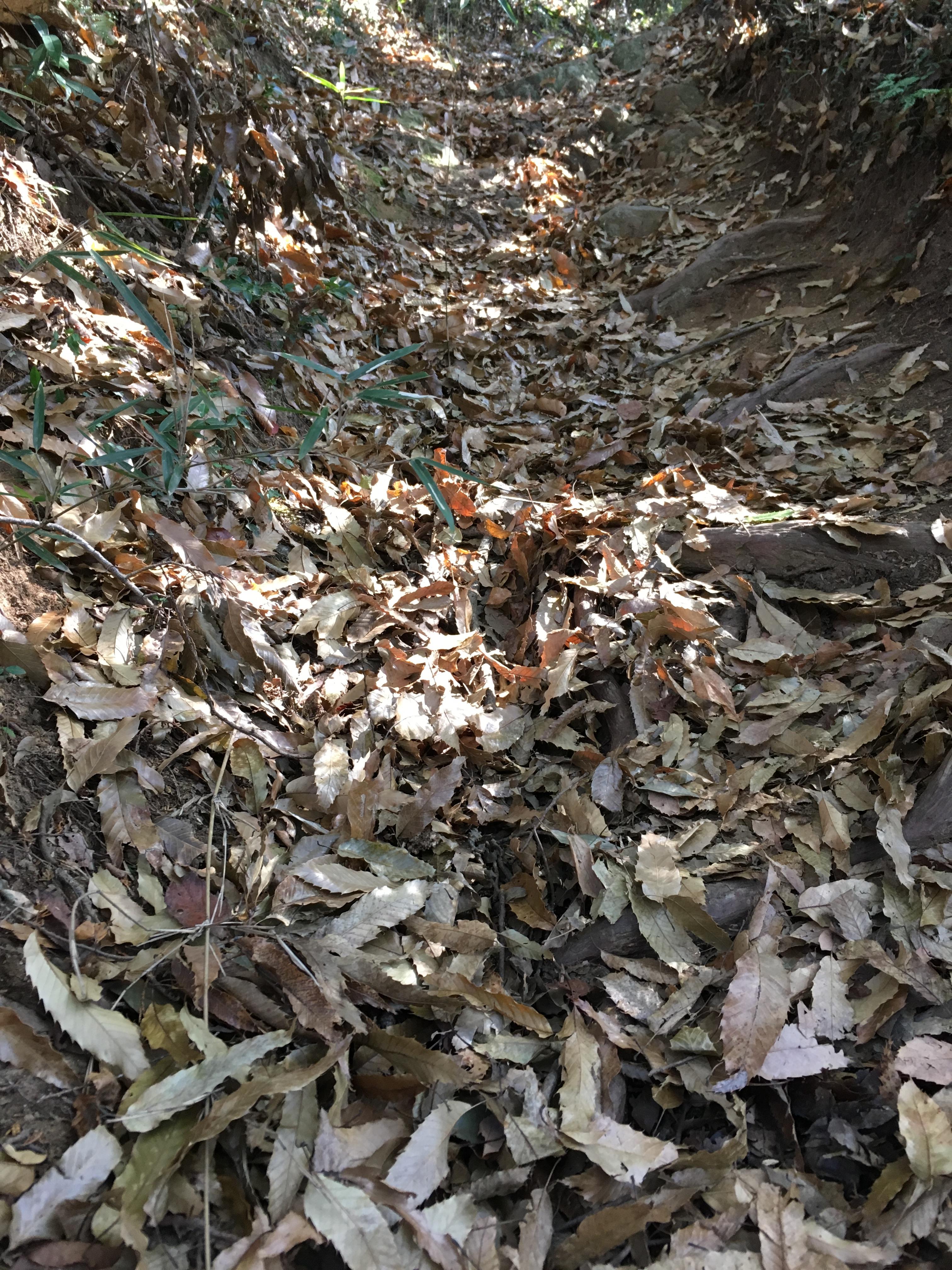ダイエット登山 宝篋山の足場の悪い山道