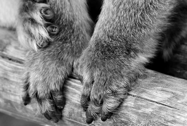 猿の足は手のように器用