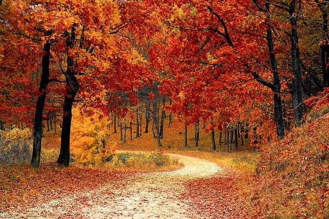 四季 季節 秋